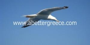 bird watching on Aegina Greece